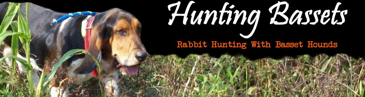 HuntingBassets.com...Rabbit Hunting With Basset Hounds
