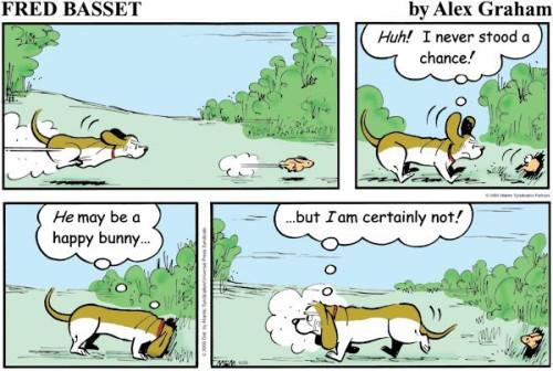 humour basset hound